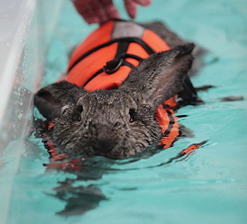 Patent An Idea >> Aching Rabbit Now Hydrotherapy Believer - AQUA Magazine