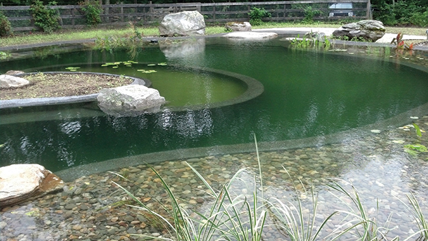 Swim ponds vs natural swimming pools two sides of the for Koi pond natural swimming pool