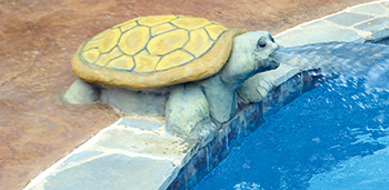 photo of a turtle pool feature