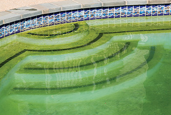 photo of a pool showing algae growth