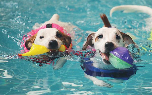 Swimming Pools: Gone to the Dogs - AQUA Magazine